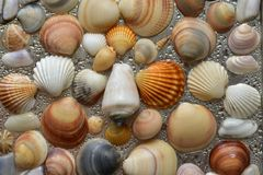 Seashells as background, sea shells collection natural stock photography