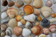 Seashells as background, sea shells collection natural stock image