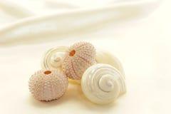 Seashells assortis photographie stock libre de droits