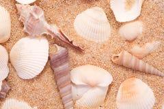 Seashells auf dem Sand stockfotos