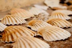 Seashells auf dem Schreibtisch Stockbild