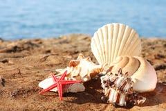 Seashells auf dem Strand Stockbild