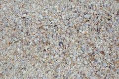 Seashells auf dem Strand lizenzfreie stockfotografie