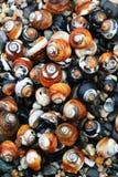 Seashells auf dem Strand Lizenzfreies Stockbild