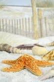 Seashells auf dem Strand Stockfoto