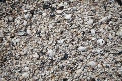 Seashells auf dem Strand Stockfotografie