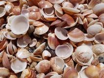 Seashells auf dem Strand Stockbilder