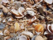 Seashells auf dem Strand Lizenzfreie Stockfotos