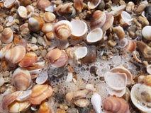 Seashells auf dem Strand Lizenzfreie Stockbilder