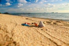 Seashells auf dem Strand stockfotos