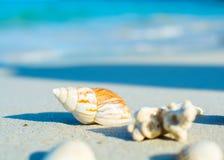Seashells auf der Küste Stockfotografie