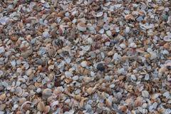 Seashells auf der Küste stockbild
