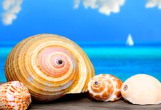 Seashells auf Dock Stockbild