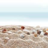 Seashells auf einem Strand stockfoto