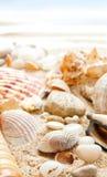 Seashells auf einem Strand lizenzfreie stockfotos