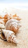 Seashells auf einem Strand stockfotos