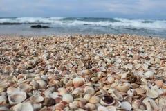 Seashells auf einem Strand stockbild