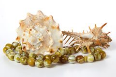 Seashells auf einem weißen Hintergrund Stockfoto