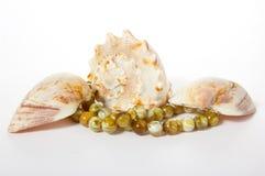 Seashells auf einem weißen Hintergrund Stockfotografie