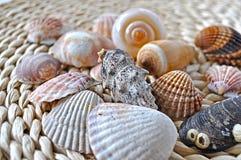Seashells auf Rattan Stockbilder