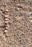 Seashells auf Sand Lizenzfreie Stockbilder