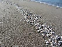 Seashells auf Sand Volleyballkugel auf leerem schönem Strand Beschneidungspfad eingeschlossen lizenzfreies stockbild