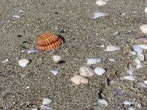 Seashells auf Sand Volleyballkugel auf leerem schönem Strand Beschneidungspfad eingeschlossen stockfoto