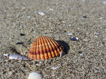Seashells auf Sand Volleyballkugel auf leerem schönem Strand Beschneidungspfad eingeschlossen stockfotos