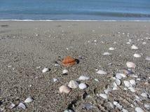 Seashells auf Sand Volleyballkugel auf leerem schönem Strand Beschneidungspfad eingeschlossen lizenzfreie stockfotografie
