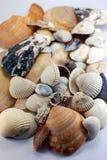 Seashells auf Weiß Stockbild