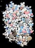 Seashells avec des programmes sur le fond noir Images libres de droits