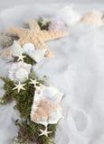 Seashells avec l'espace de copie photos libres de droits