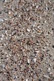 Seashells backgronds lizenzfreies stockfoto