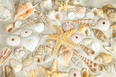 Seashells background Stock Photography