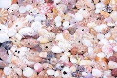 Seashells background Royalty Free Stock Image