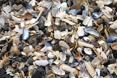 Seashells background Royalty Free Stock Photos