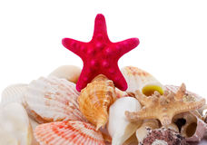 Seashells background Stock Photos