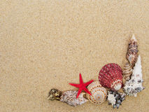 Seashells background. Frame made with seashells with copyspace stock image