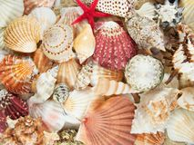 Seashells background Royalty Free Stock Image