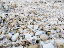 Seashells. Background of seashells Royalty Free Stock Image
