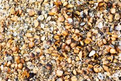 Seashells Background & Backdrops on the beach. Seashell closeup image backdrops Royalty Free Stock Photos