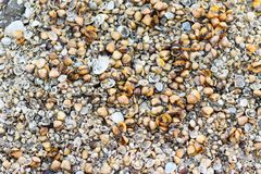 Seashells Background & Backdrops on the beach. Seashell closeup image backdrops Royalty Free Stock Image