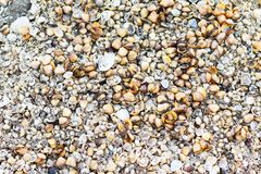 Seashells Background & Backdrops on the beach. Seashell closeup image backdrops Stock Photo