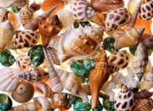 Seashells background Royalty Free Stock Images