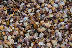 Seashells background Stock Images