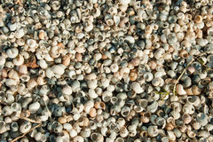 Seashells background Royalty Free Stock Images