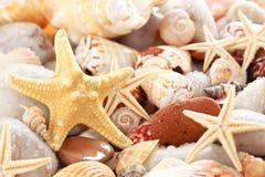 Seashells background. Royalty Free Stock Image