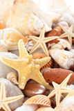 Seashells background. Royalty Free Stock Photography
