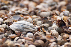 Seashells background, clouseup Stock Images