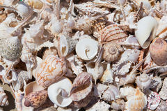 Seashells. Background, the Seashells composition,abstract Royalty Free Stock Photos